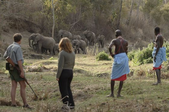 Kitich Camp forest walk with elephants