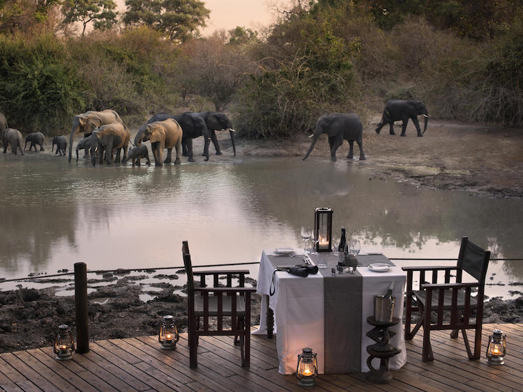 Kanga dinner with elephants
