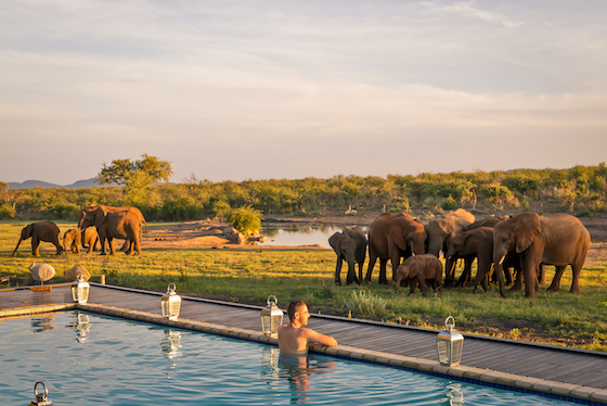 Jamal Madikwe Pool Safari